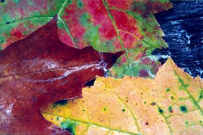 muddobber leaves