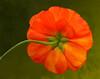 050417-130326-_MG_2490 flower printed 14x11 ver2
