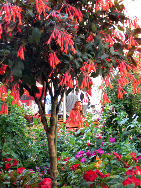 Flowers&Trees