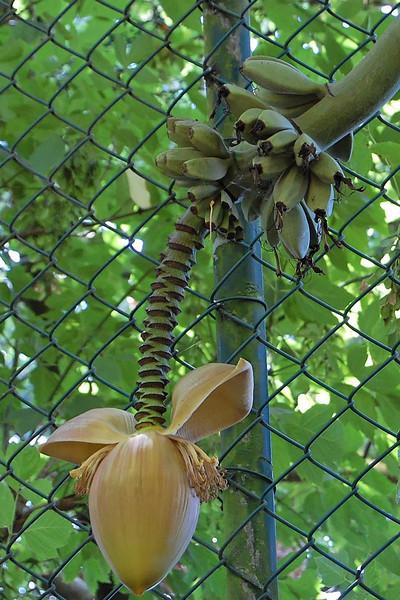Zoo da Maia . 07-08-2007