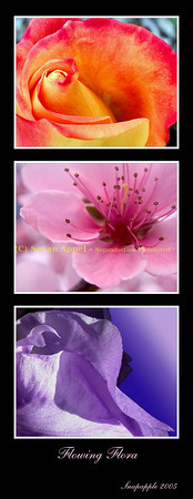 Flowing Flora Triptych - Flowing curves of flower petals
