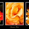Summer Heat - Triptych of hot yellow flowers