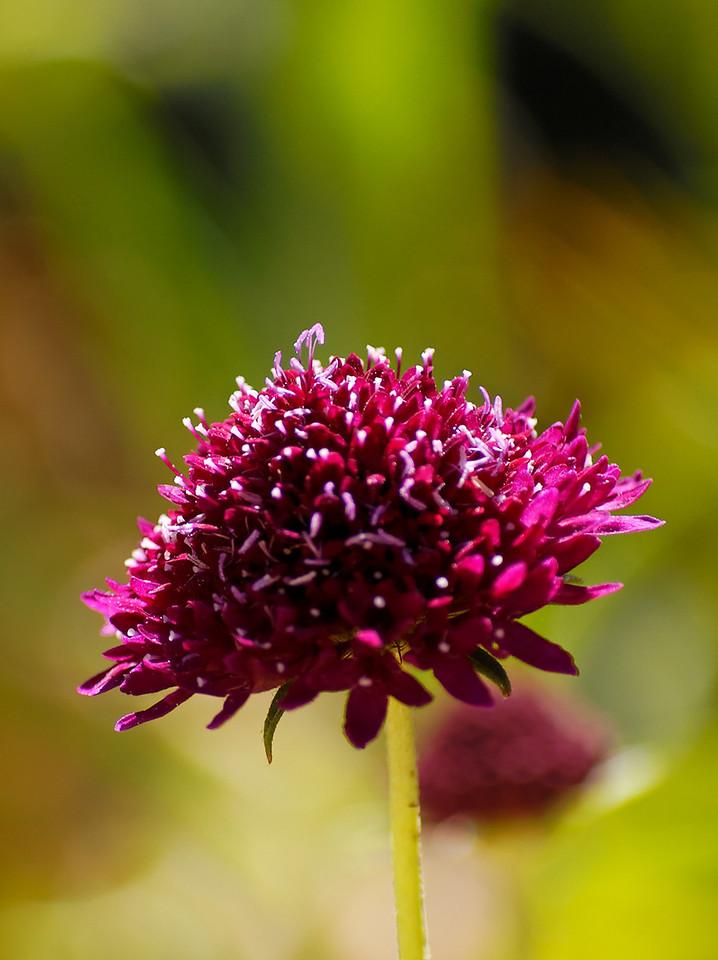 1.9.2.Flores<br /> Julho 2008