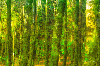 penoita - Vouzela - Serra do Caramulo (>800m)