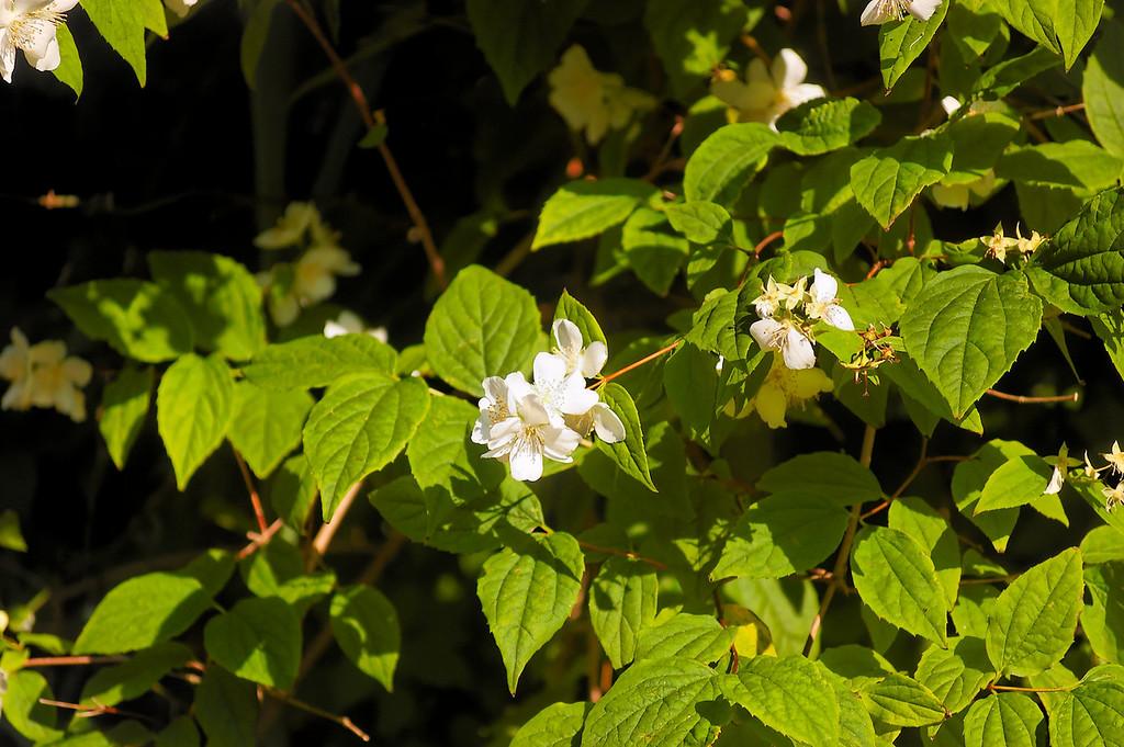 Oliveirinha - 26-04-2008 - 6612