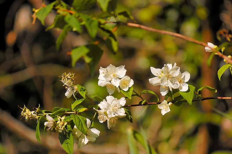 Oliveirinha - 26-04-2008 - 6615