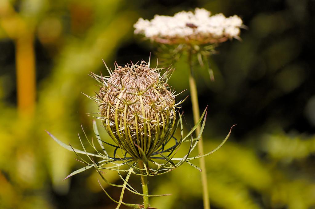 1.9. A caminho de Moçamedes (antiga S. Miguel do Mato)-Flores<br /> Julho 2008