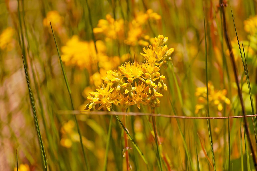 Cunhedo - Vouzela - 07-06-2008 - 8407