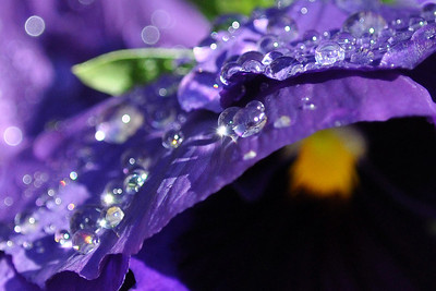 "Dripping in Diamonds -  ""Beauty doesn't need ornaments. Softness can't bear the weight of ornaments.""  ~Munshi Premchand"