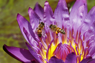 Two bee's or not two bee's ~ that is the question.
