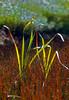 sunny grasses