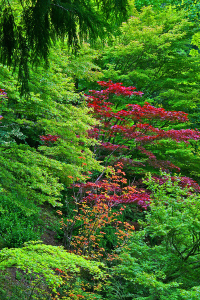 Shades of green with red