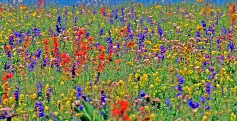 Wildflower Monet