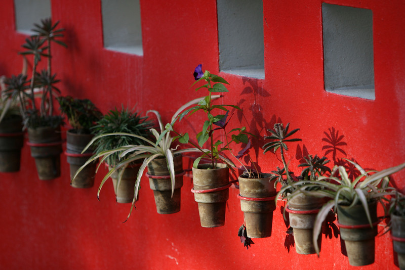 Flowerpots on a wal