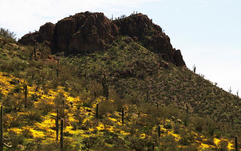 Saguaro and rock cliffs