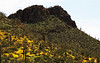 Saguaro and rock cliffs