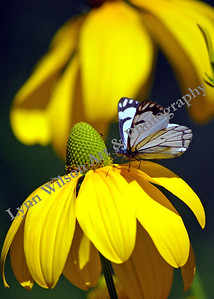 Butterfly On Flower Verticle