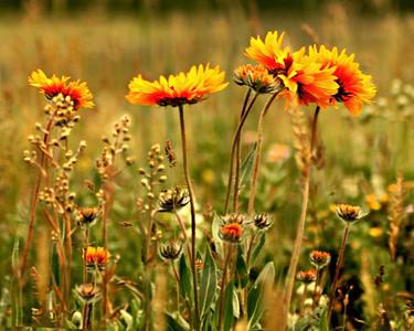 Winnipeg Nature Photography