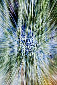 Lavender Star Field