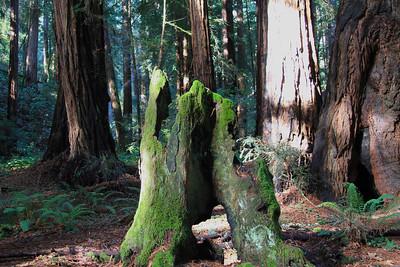 Muir Woods 2012