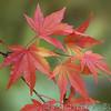 Fall_006_BBG_LH0A2482_M_Burton_