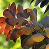 Fall_013_BBG_LH0A1835_M_Burton_