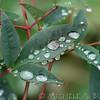 Fall_010_BBG_LH0A2292_M_Burton_