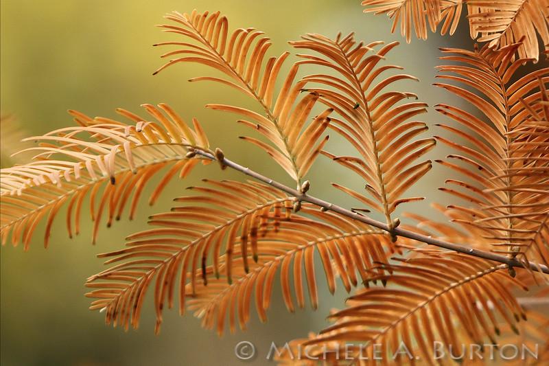 Fall_022_BBG_LH0A3373_M_Burton_