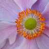 Botanics_1_04
