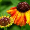 Botanics_2_03