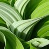 Botanics_2_02