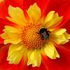 Botanics_1_01