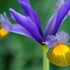 Botanics_1_02