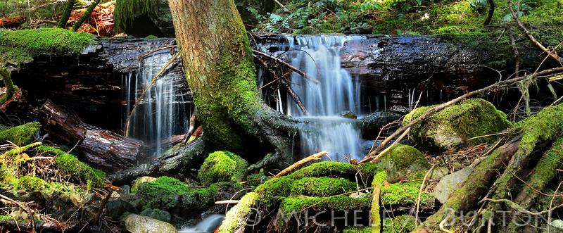 Small waterfall on Snoquera Falls Trail, Washington