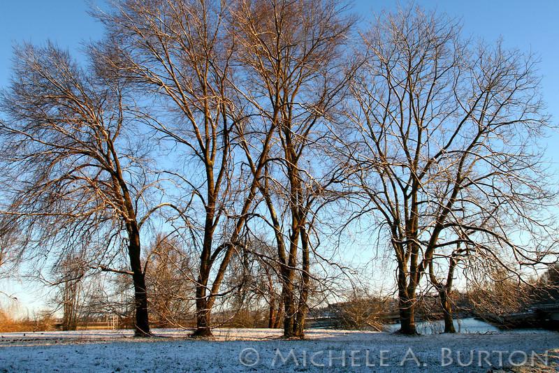 Arboretum Wetlands 2006