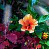 Flowers shot at the Atlanta Botanical Garden