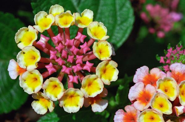 Flower in Florida