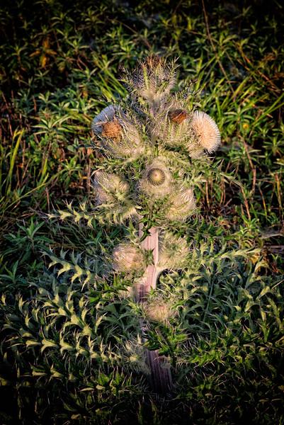 Flowering Cactus Plant, Washington Oaks