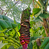 Florida Botanical Gardens, Largo