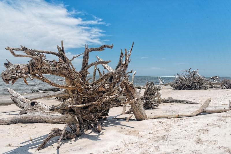 Driftwood on Boneyard Beach