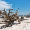 Driftwood on Boneyard Beach