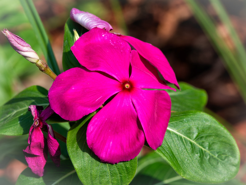 Flower in my Jacksonville Beach yard.