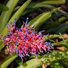 Spring Hill's Nature Coast Botanical Gardens