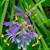flower_macro_2_2