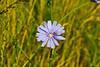 Purple flower in meadow