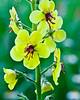 Yellow flower in meadow