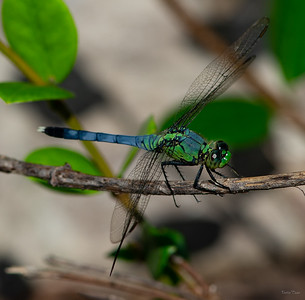 Side view of small dragonfly