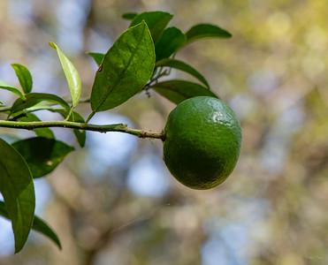 Lime!!