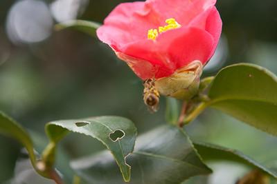 Various Flowers 2009-5478