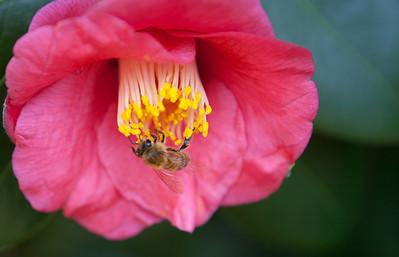 Various Flowers 2009-5470